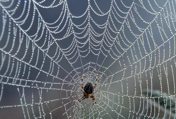 spider-web-with-dew11